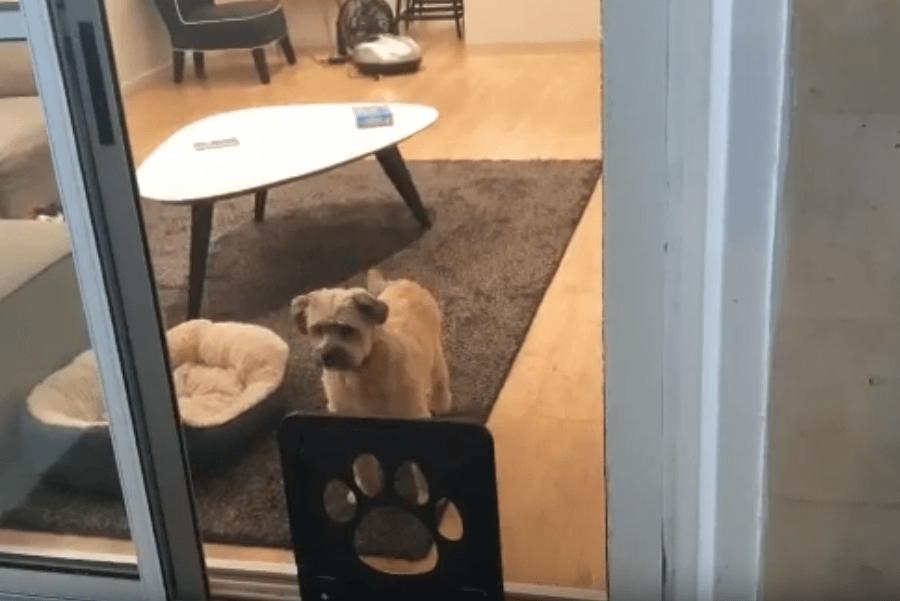 דלת מעבר לחיות מחמד